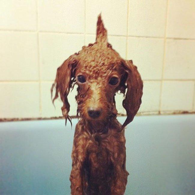 22-imagens-que-provam-que-a-hora-do-banho-dos-filhotes-de-cachorro-é-a-mais-fofa-do-dia-Blog-Animal (7)