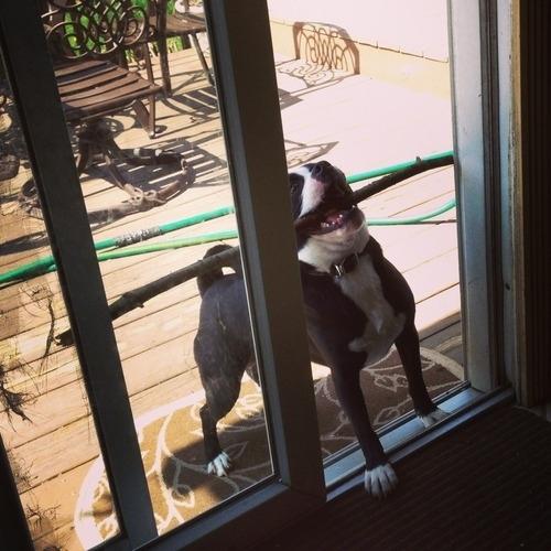 28-Cachorros-que-se-arrependeram-de-suas-decisões-Blog-Animal (12)