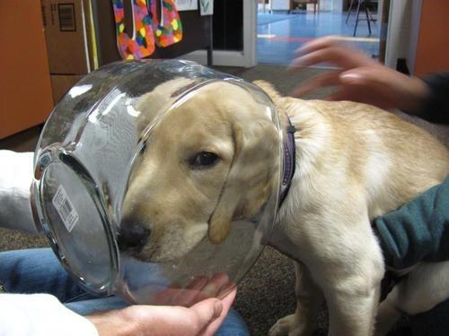 28-Cachorros-que-se-arrependeram-de-suas-decisões-Blog-Animal (13)