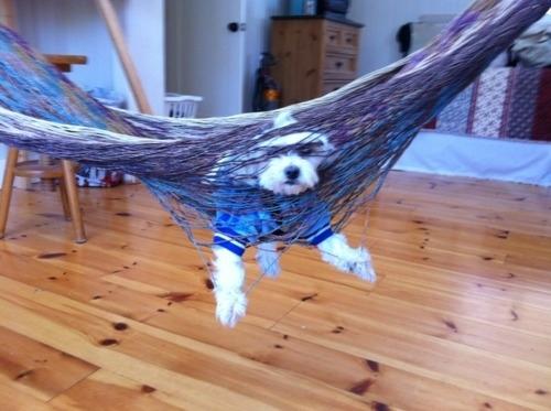 28-Cachorros-que-se-arrependeram-de-suas-decisões-Blog-Animal (14)