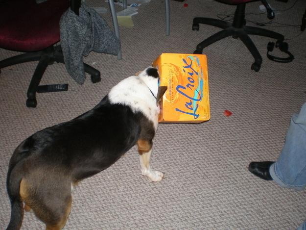 28-Cachorros-que-se-arrependeram-de-suas-decisões-Blog-Animal (15)