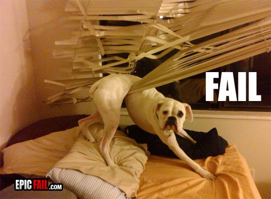 28-Cachorros-que-se-arrependeram-de-suas-decisões-Blog-Animal (4)