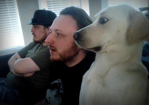 28-Cachorros-que-se-arrependeram-de-suas-decisões-Blog-Animal (7)