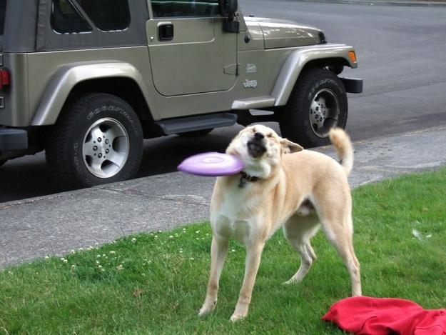 28-Cachorros-que-se-arrependeram-de-suas-decisões-Blog-Animal (8)