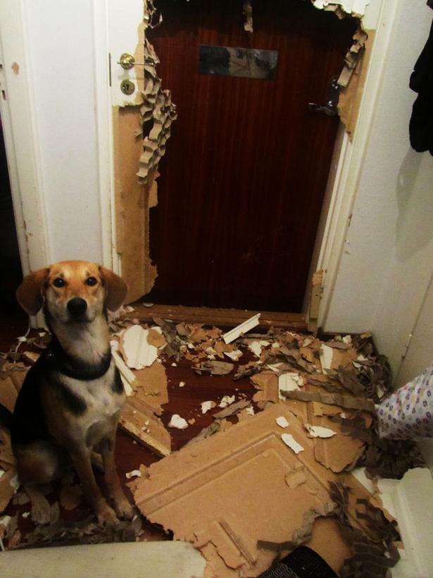 28-Cachorros-que-se-arrependeram-de-suas-decisões-Blog-Animal (9)