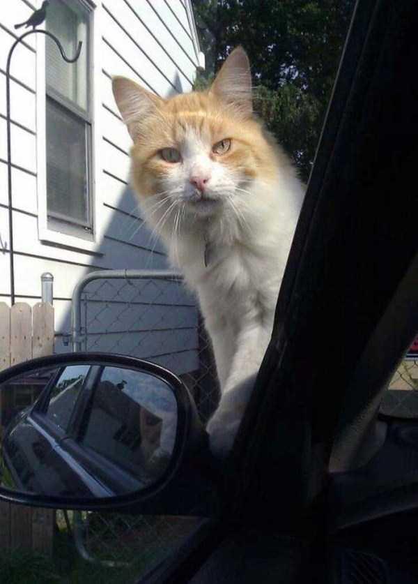 Cães-e-gatos-que-precisam-desesperadamente-de-atenção-Blog-Animal (14)