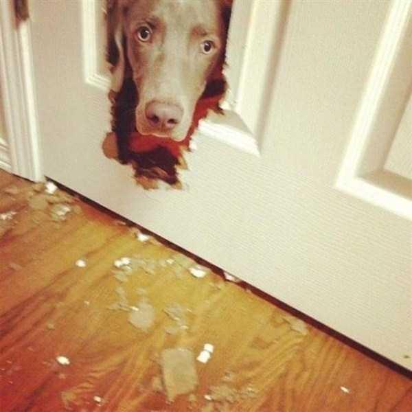 Cães-e-gatos-que-precisam-desesperadamente-de-atenção-Blog-Animal (16)