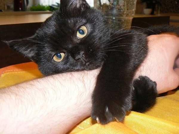 Cães-e-gatos-que-precisam-desesperadamente-de-atenção-Blog-Animal (18)
