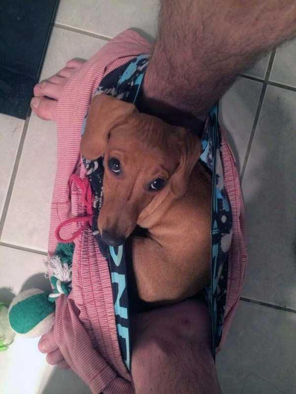 Cães-e-gatos-que-precisam-desesperadamente-de-atenção-Blog-Animal (19)