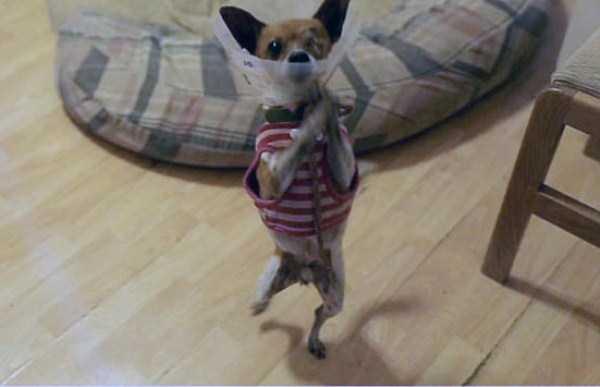 Cães-e-gatos-que-precisam-desesperadamente-de-atenção-Blog-Animal (22)