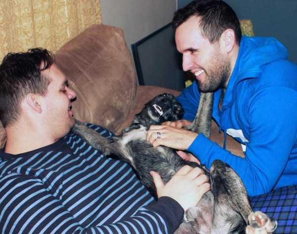 Cães-e-gatos-que-precisam-desesperadamente-de-atenção-Blog-Animal (24)