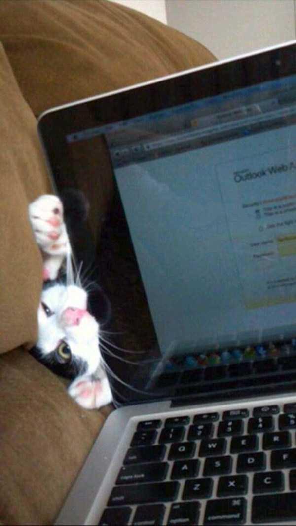 Cães-e-gatos-que-precisam-desesperadamente-de-atenção-Blog-Animal (3)