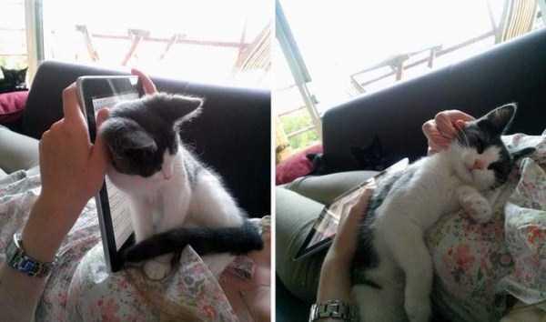 Cães-e-gatos-que-precisam-desesperadamente-de-atenção-Blog-Animal (7)