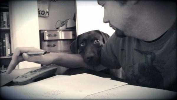 Cães-e-gatos-que-precisam-desesperadamente-de-atenção-Blog-Animal (8)