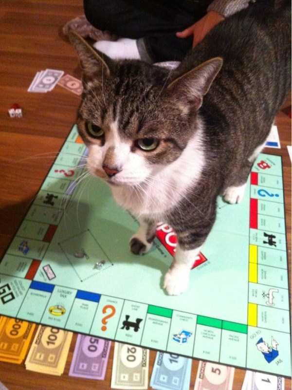 Cães-e-gatos-que-precisam-desesperadamente-de-atenção-Blog-Animal (9)