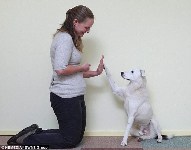 Cão surdo, abandonado, aprende comandos através de linguagem de sinais - Blog Animal