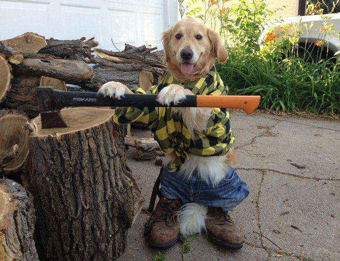 Conheça Bailey, a cadela que faz tudo