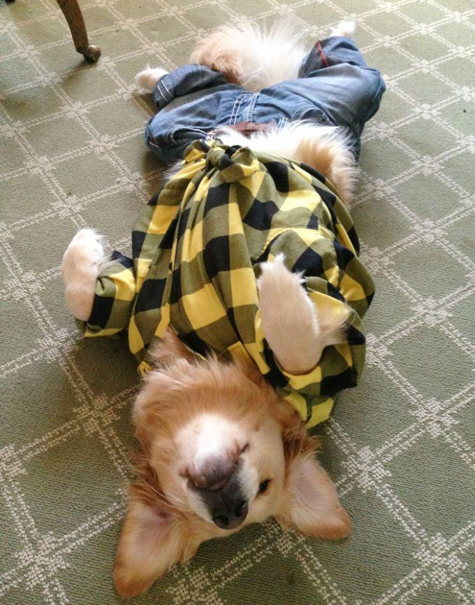 Conheça Bailey, o cão que faz tudo  (11)