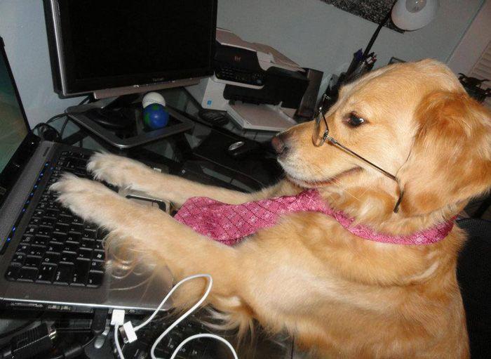 Conheça Bailey, o cão que faz tudo  (12)