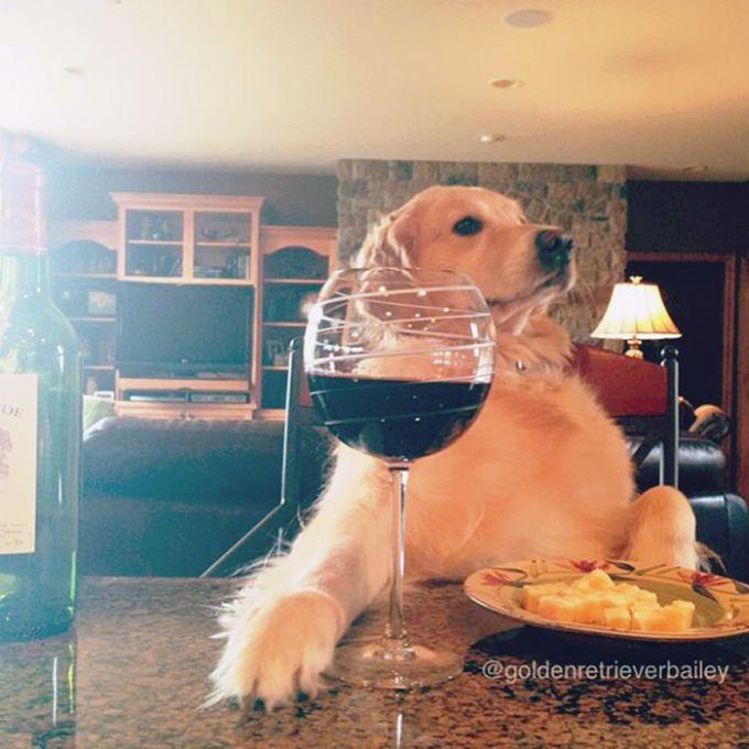 Conheça Bailey, o cão que faz tudo  (13)