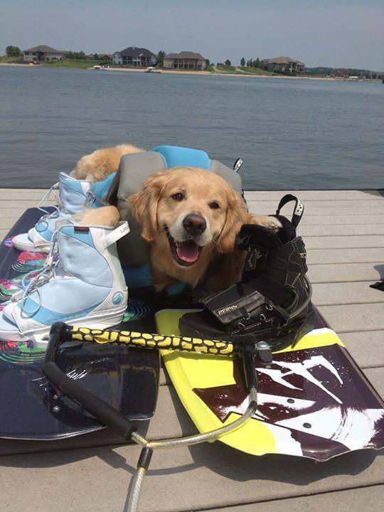 Conheça Bailey, o cão que faz tudo  (14)