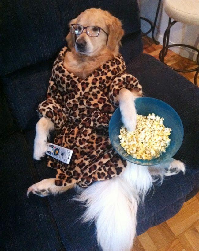 Conheça Bailey, o cão que faz tudo  (15)