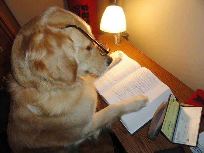 Conheça Bailey, o cão que faz tudo  (17)