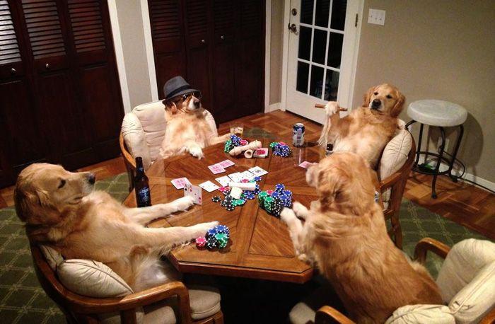 Conheça Bailey, o cão que faz tudo  (2)