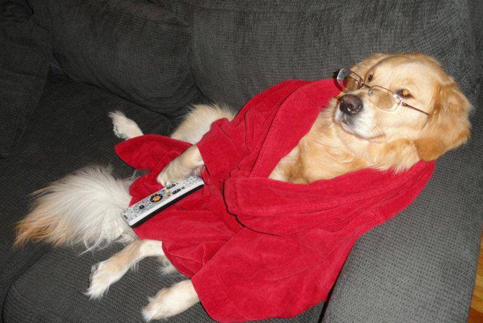 Conheça Bailey, o cão que faz tudo  (3)