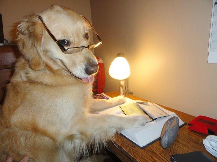 Conheça Bailey, o cão que faz tudo  (4)