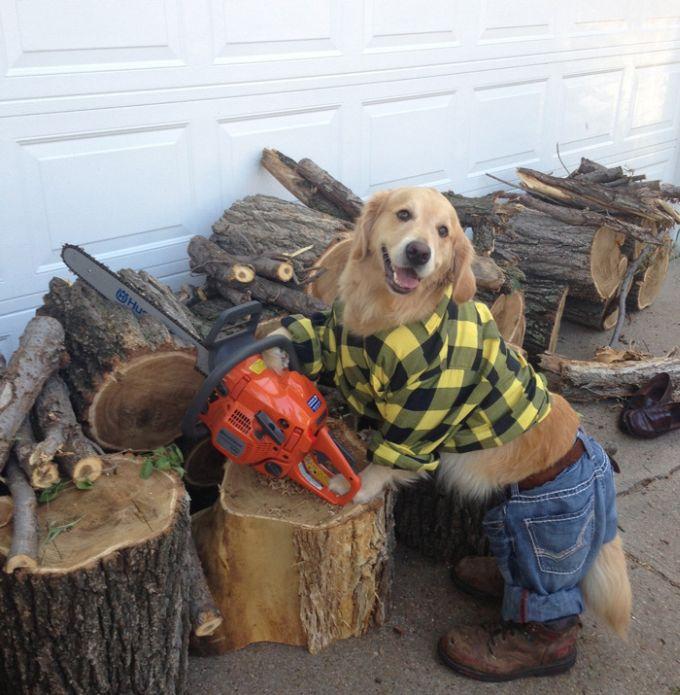 Conheça Bailey, o cão que faz tudo  (5)
