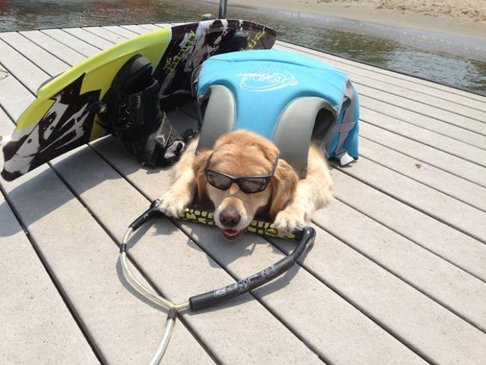 Conheça Bailey, o cão que faz tudo  (6)