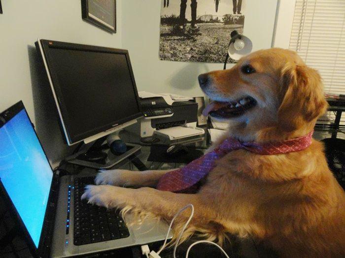Conheça Bailey, o cão que faz tudo  (8)