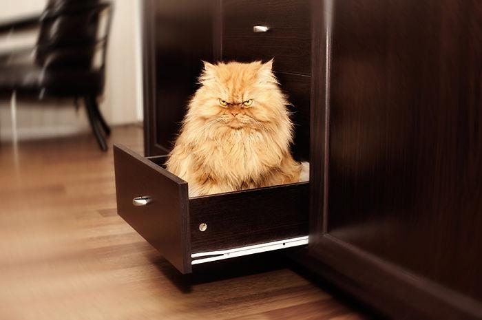 Conheça Garfi, O Gato Mais Raivoso do Mundo (11)