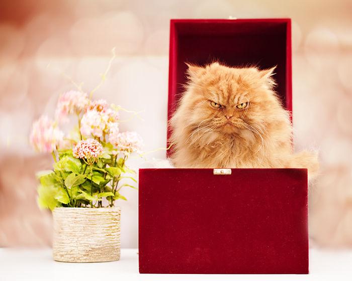 Conheça Garfi, O Gato Mais Raivoso do Mundo (14)