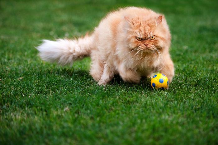 Conheça Garfi, O Gato Mais Raivoso do Mundo (16)
