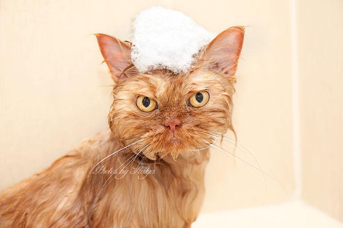 Conheça Garfi, O Gato Mais Raivoso do Mundo (19)