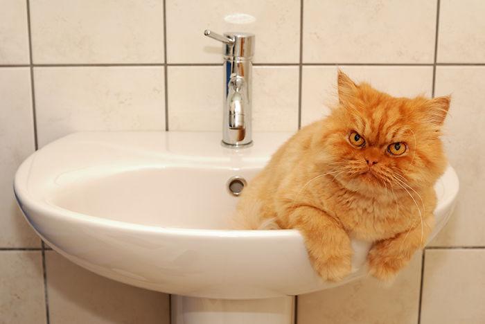 Conheça Garfi, O Gato Mais Raivoso do Mundo (5)