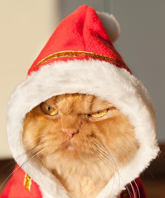 Conheça Garfi, O Gato Mais Raivoso do Mundo (6)