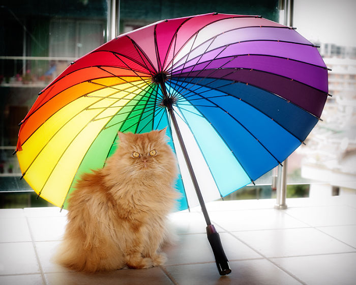 Conheça Garfi, O Gato Mais Raivoso do Mundo (7)