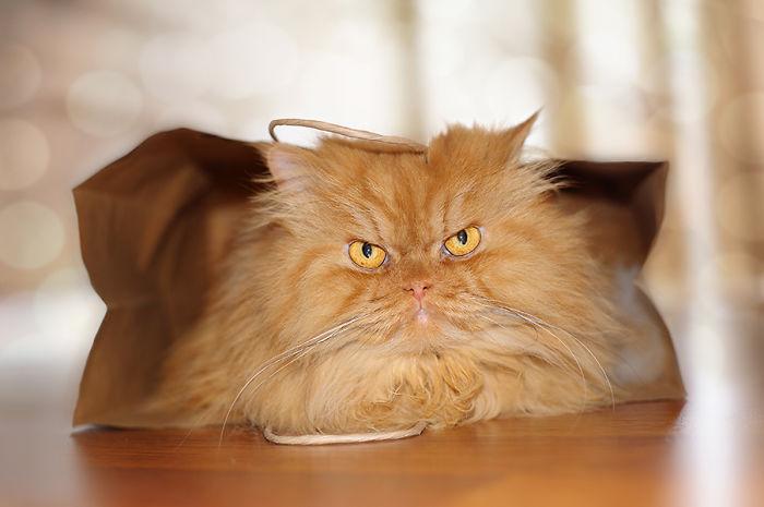 Conheça Garfi, O Gato Mais Raivoso do Mundo (8)