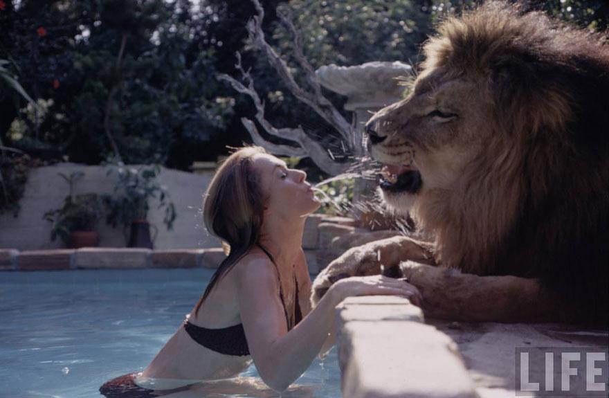 Esta família vivia com um Leão em 1971 (1)