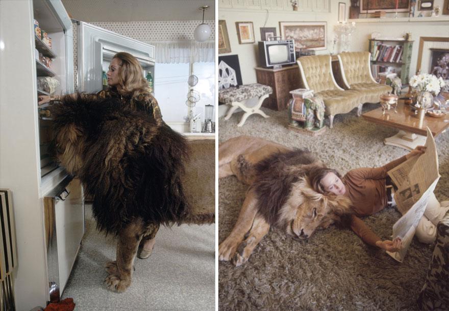 Esta família vivia com um Leão em 1971 (10)