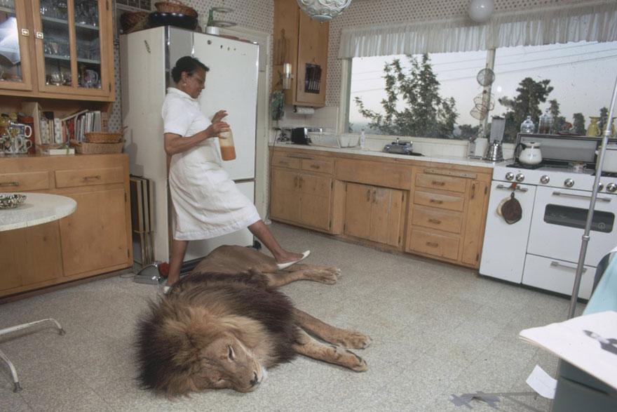 Esta família vivia com um Leão em 1971 (2)