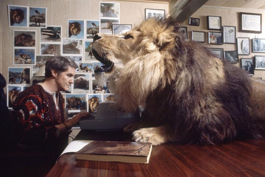 Esta família vivia com um Leão em 1971 (6)