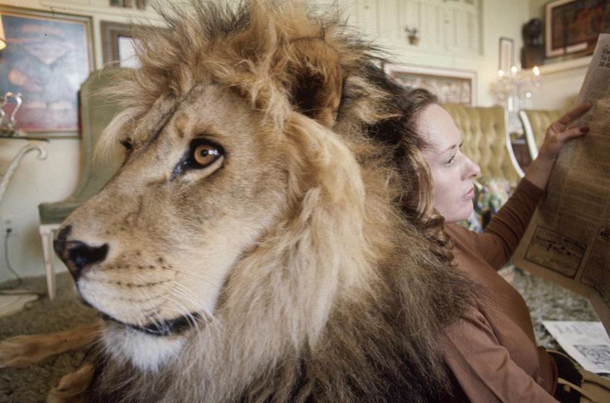 Esta família vivia com um Leão em 1971 (7)