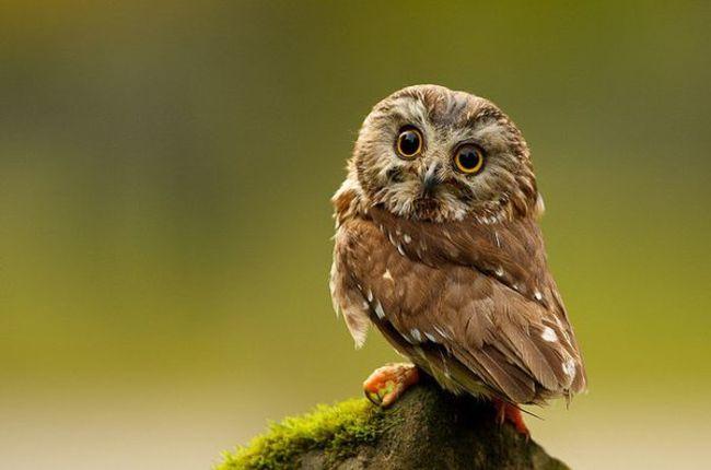 Estas-fotos-provam-que-as-corujas-são-aves-magníficas-Blog-Animal (10)