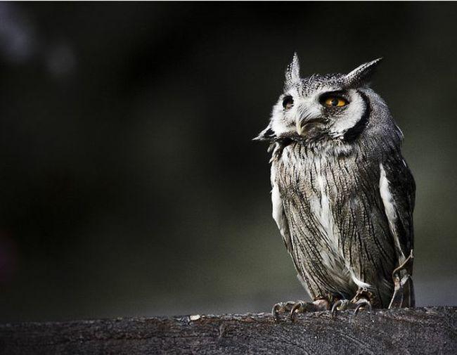 Estas-fotos-provam-que-as-corujas-são-aves-magníficas-Blog-Animal (14)