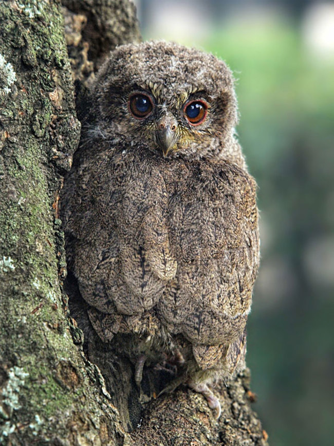 Estas-fotos-provam-que-as-corujas-são-aves-magníficas-Blog-Animal (16)