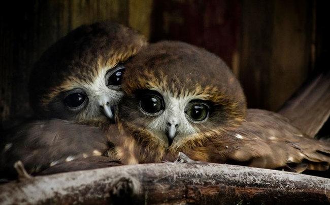 Estas-fotos-provam-que-as-corujas-são-aves-magníficas-Blog-Animal (17)
